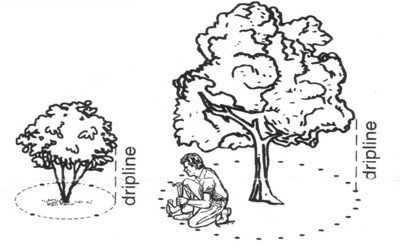 Requerimientos de fertilizantes de árboles anaranjados - Wikifarmer